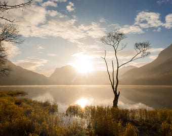 Lonely tree, Buttermere, Lake District National Park, UK