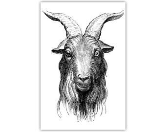Goat, Animal Art, Vintage Illustration, Canvas Print, Large Poster