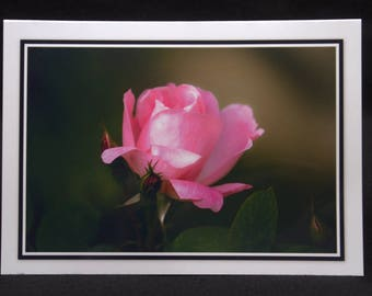A Pink Rose 5x7 Blank Card By ThomasMinutoloPhotos