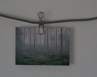 Misty Woods Forest Nature Photography Postcard Photo Print Landscape Art