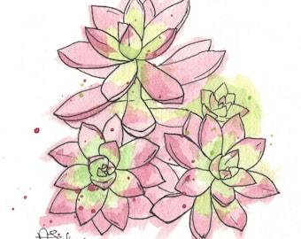 """Succulents C 10x10"""" Matted Giclée Print"""