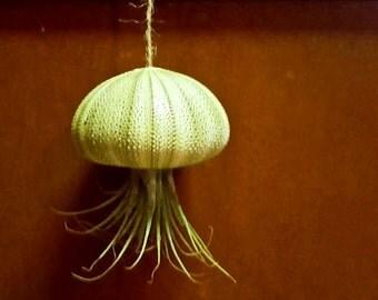 "Air Plant Sea Urchin ""Jellyfish."""