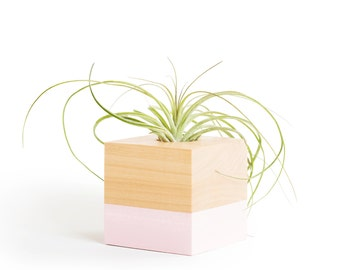 FREE SHIPPING, 5 Pastel Colors, Gifts For Her, Air Planter, Air Plant, Desk Planter, Tillandsias, Bestfriend Gifts, Planter, Terrarium, Pink