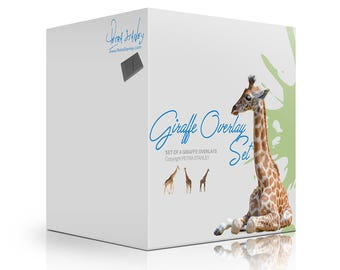 Giraffe Overlays - Set of 4 Transparent Giraffes - Photoshop Giraffes - Giraffe Photos - Digital Overlay - Instant Download - Animal Overlay