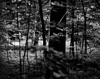 Trees, high contrast black and white photograph of trees at a private camp