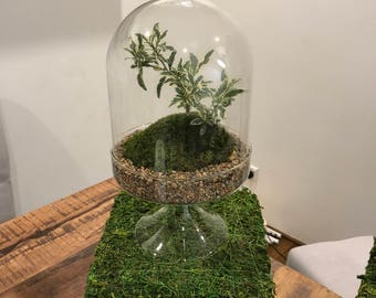 Serrisa in a Bell Jar