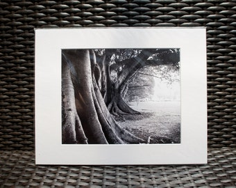 "Nature Photography, 11x14"" matted print, wall art, matted photo, 8x10 print, Black and White"