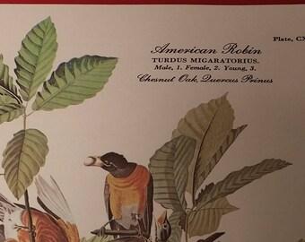 "J.J. Audubon 17 full-color Havell reproductions 6""x8"""
