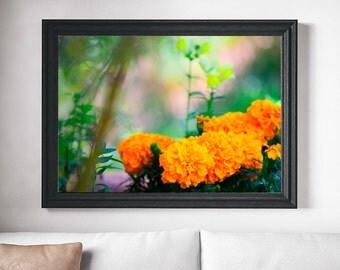 Print -- Marigold, Flower, Instant Download, Printable