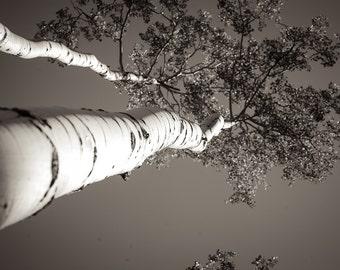 Aspen Sky
