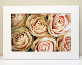 Mounted Photograph of Pink Sweet Avalanche Roses