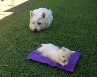 Sunbathing Westie
