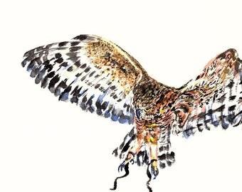 Owl Watercolor Print