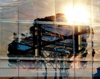 Tree of the future/Photo Print-giclee print