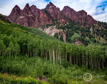 Aspen Grove, Aspen trees, Maroon Bells, Colorado