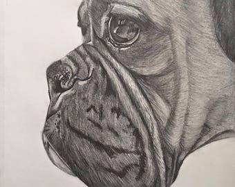 Boxer dog pencil drawing