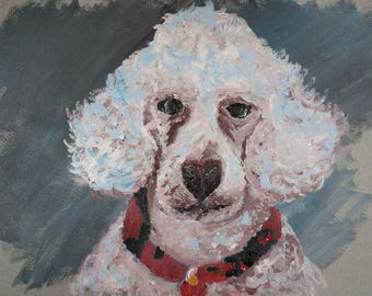 poodle with red collar