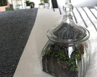 Mid size terrarium