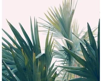 Nature Photograph- Palm Tree Print - Tropical Art - Palm Art - Reach For The Sky - Fine Art Print- California Print - Florida Art Print