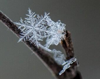 Snowflake, Ice Crystals, Winter Magic, Photograph or Greeting card
