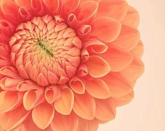 Dahlia Art, Flower Print, Dahlia Flower Wall Art, Dahlia Print, Orange Flower Photography Print, Nature Photography Print