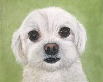 5x5 Giclee Print white dog by Rsalcedo Free Shipping FFAW