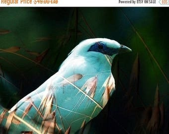 SALE-35% OFF, Fine Art Print, Giclee Archival Print, Photomontage, Collage, Painted Photographs, Blue Bird Sing Me A Song