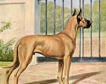 Vintage Dog Illustration Great Dane Edwin Megargee