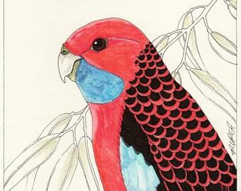 Crimson Rosella - Original Art