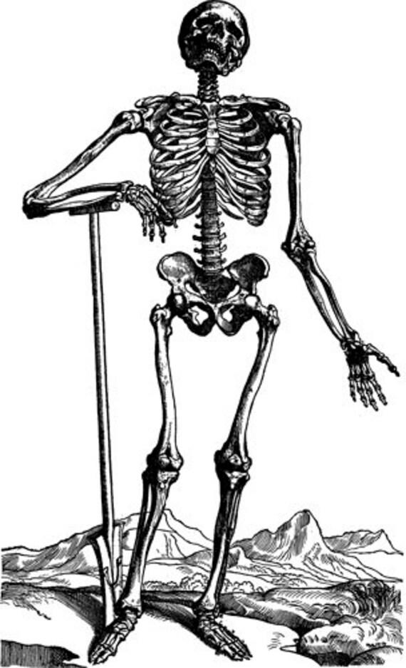 male skeleton anatomy clipart png clip art digital image download graphics printable art biology science digi stamp digital stamp