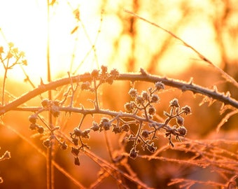 """Sunset Country Photo - 10x8"""" - country, rural, fall, autumn, evening, brambles, woods, nature"""