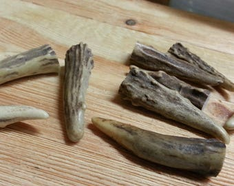 Gnarly Deer Antler Points Tips- 1.5-2 inches- 10 pcs- Lot No. 170302-Q