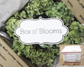 Dried Hydrangea Pieces/  BOX O' BLOOMS /18~ Mixed colors of Green, Blue, Lavender,  ~ Wedding -Organic ~ Lot #94