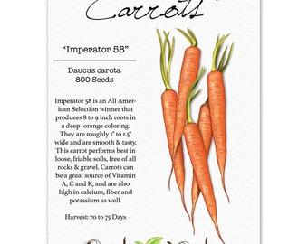 Carrot Seeds, Imperator (Daucus carota) Non-GMO Seeds by Seed Needs