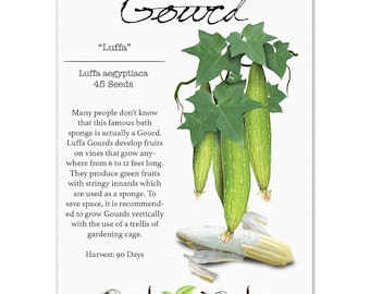 Luffa Gourd Seeds (Luffa aegyptiaca) Non-GMO Seeds by Seed Needs