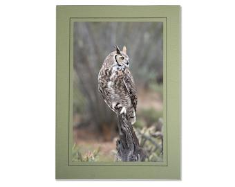 Great Horned Owl Cards - Desert Owl Photos - Cards of Great Horned Owls - Handmade Great Horned Owl Card - Bird Photo Cards