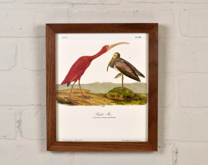 "Framed Audubon Bird Print ""Scarlet Ibis"" Full Color Reproduction - Solid Natural Walnut Peewee Style - IN STOCK - Same Day Shipping"