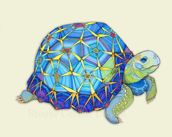 The Star Tortoise Colorful Turtle
