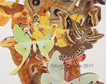 Paper Moths - realistic paper moth cut outs - Premium random selection