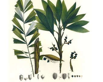 Palm Print Botanical Book plate,SALE Buy 3, get 1 free Large for Framing