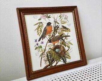 Vintage Robins Nest Botanicals Art Print in Wood Frame, Bird Picture 11 x 11, Michigan Wisconsin Connecticut State Birds & Flowers