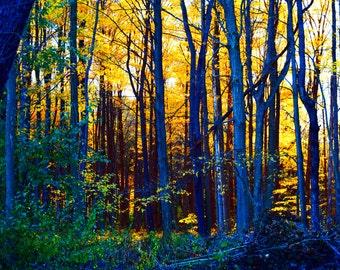 Fine Art Photography Print, New York Autumn Landscape, 20x24 Wall Art