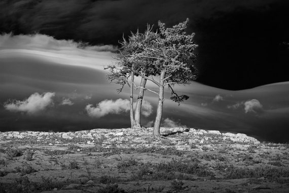 Wind Swept Clouds and Trees on a Rocky Ridge by the Many Glacier Hotel in Glacier National Park A Black and White Fine Art Photograph