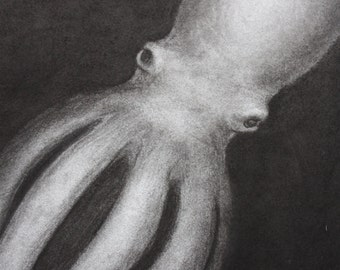 Night Squidopus (squid octopus) original charcoal drawing on paper