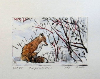 Fox study - small drypoint engraving with hand colour
