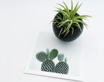 Mini Air Plant Pod Magnet with Air Plant // Black