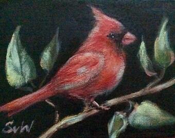 """Red cardinal bird no.7  painting original art 5 x 7"""""""