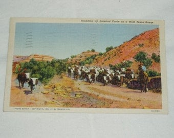 Cowboy Postcard, Cattle Roundup in West Texas