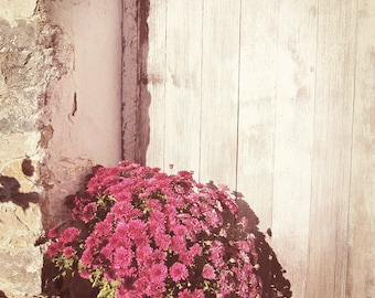 Flower Photography, Farmhouse Decor, Farmhouse Wall Art, Cottage Chic, Shabby Decor, Rustic Photography, Vintage Home Decor, Old Wood Door