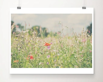red poppy photograph red flower photograph wild flower print nature photography poppy print summer photograph english garden print